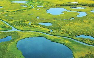 Васюганські болота — цікаві факти