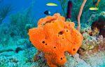 Морські губки — цікаві факти
