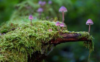 Чому гриби виокремили в самостійне царство