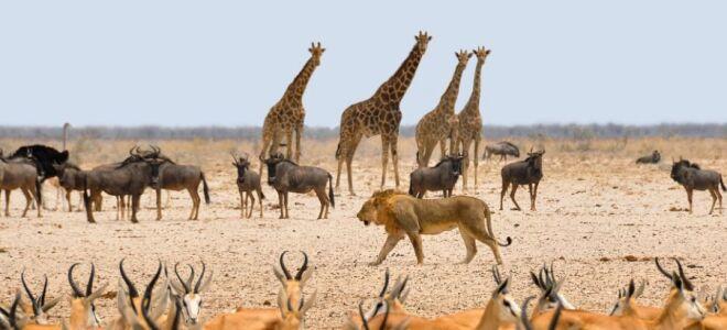 Намібія — цікаві факти