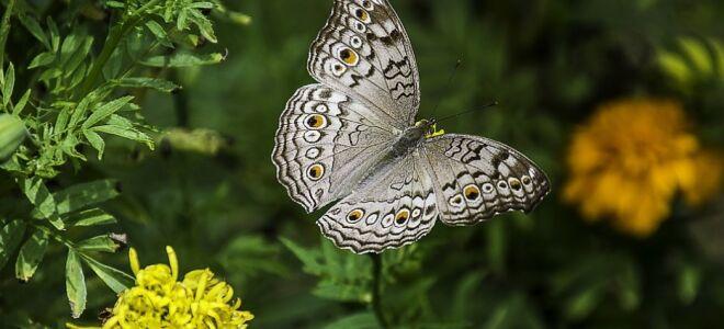 Дихальна система комах — цікаві факти