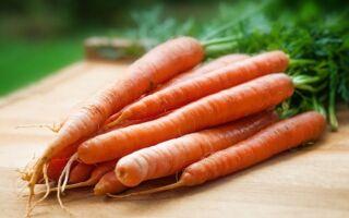 Чому розтріскується морква на грядці