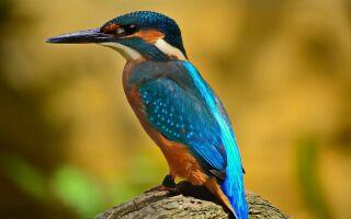 Птахи — цікаві факти