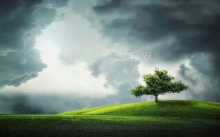 Дерева — цікаві факти