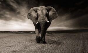 Тварини — цікаві факти