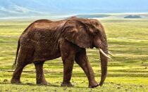 Тварини Африки — цікаві факти
