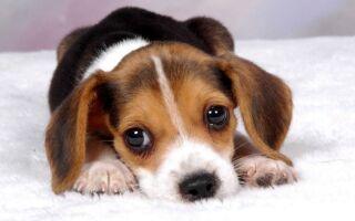 Ветеринари — цікаві факти