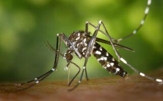 Комарі — цікаві факти