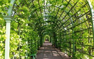 Літній сад — цікаві факти