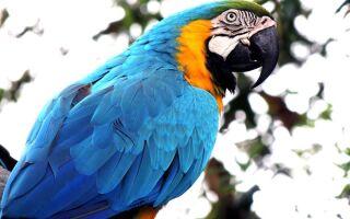 Папуги — цікаві факти