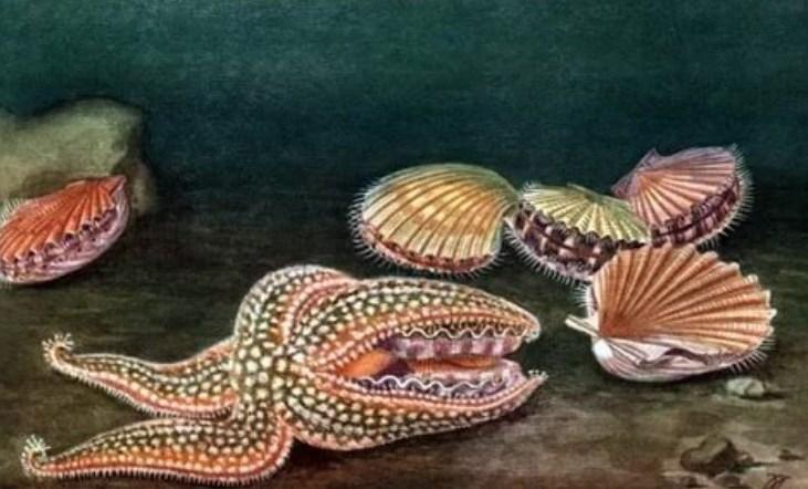 Морські гребінці