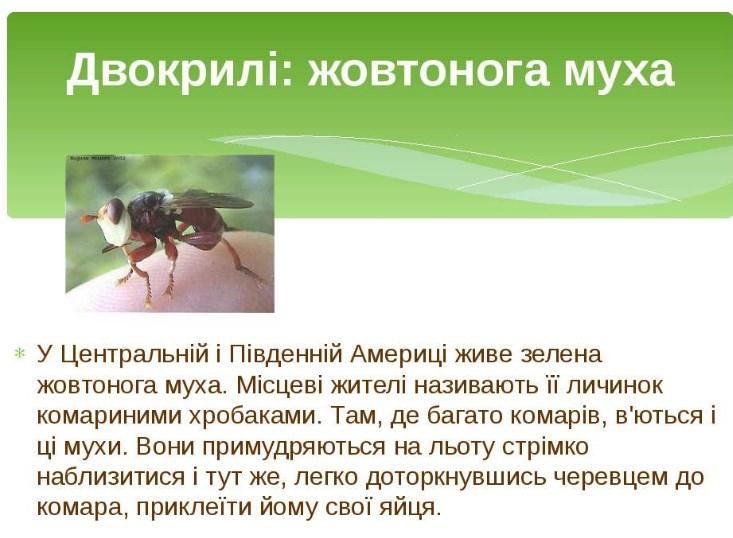 Жовтонога муха