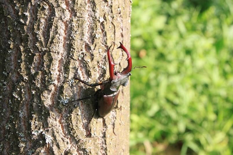 На стовбурі дерева