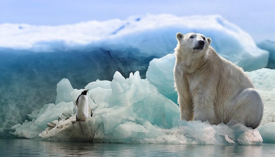 В Арктиці