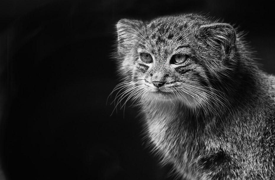Мисливець