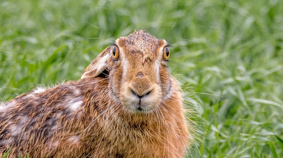 Image result for зайці