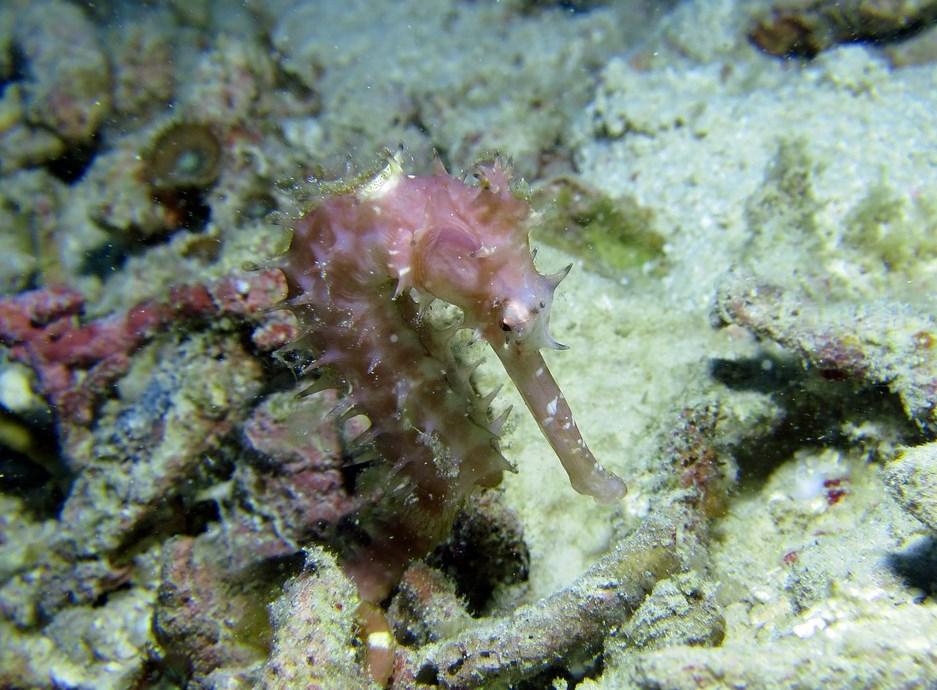 Серед коралів
