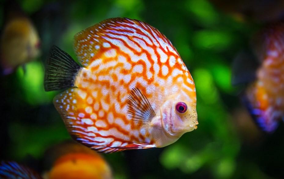В акваріумі