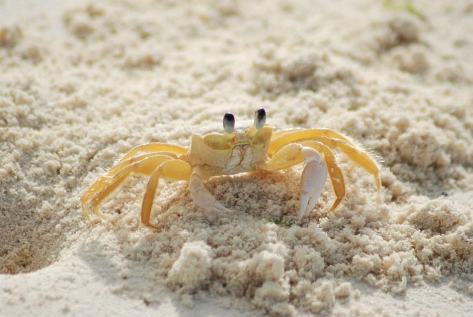 На піску