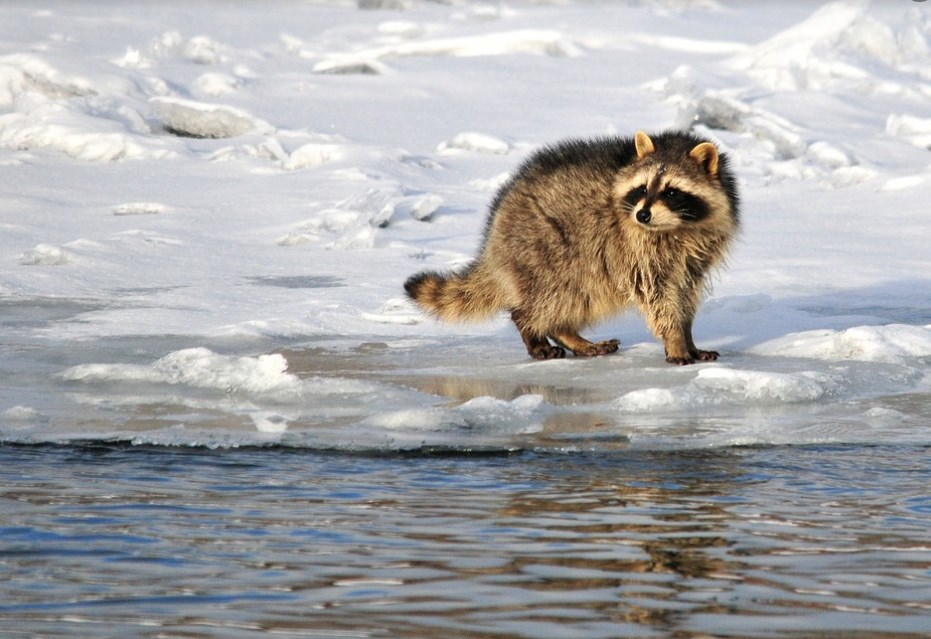 На полюванні