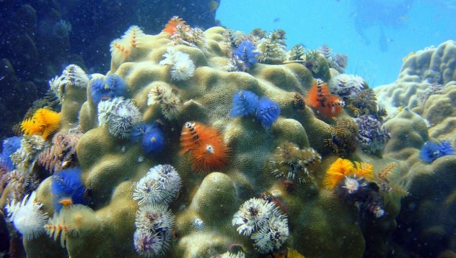 Підводні