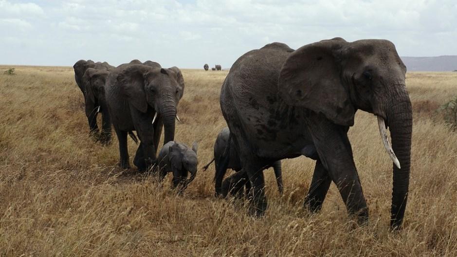 Слони