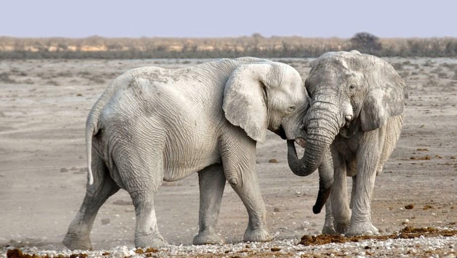 В Намібії