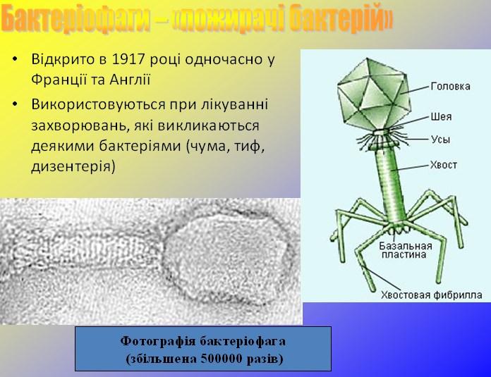 Бактеріофаг