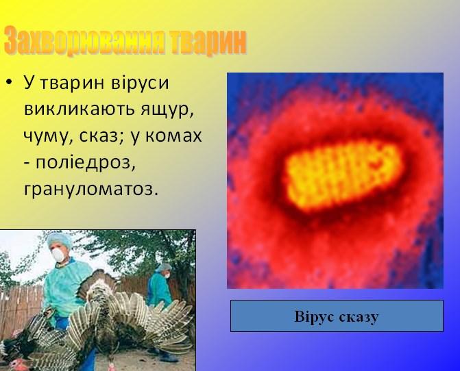 Захворювання тварин