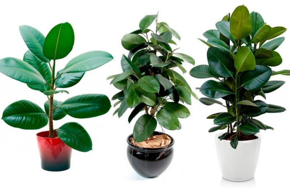 Здорові рослини