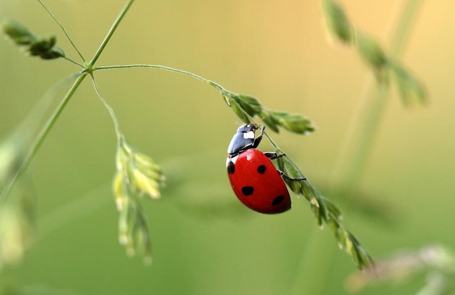 На траві