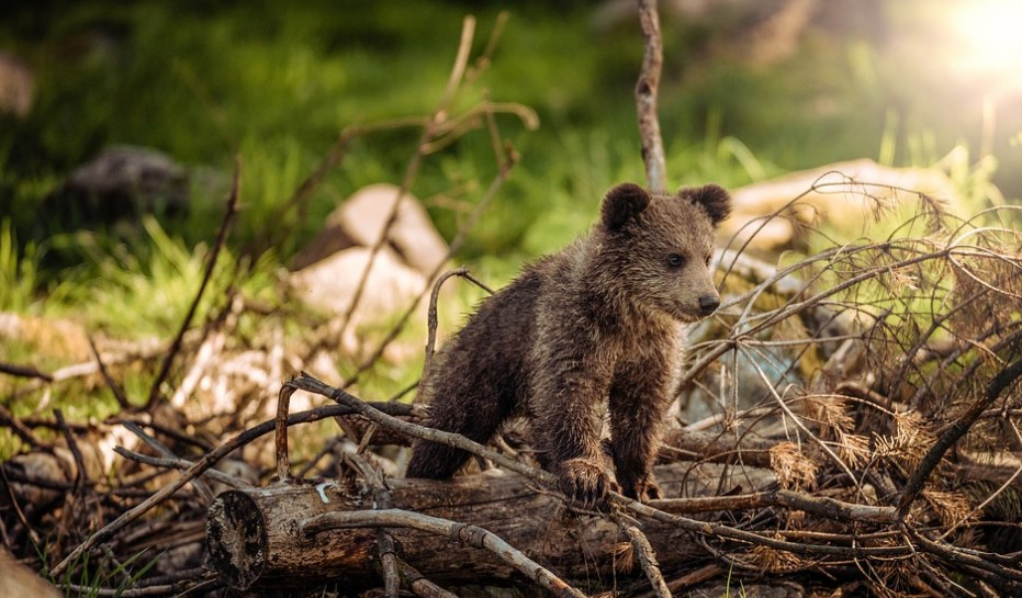 Медвежа